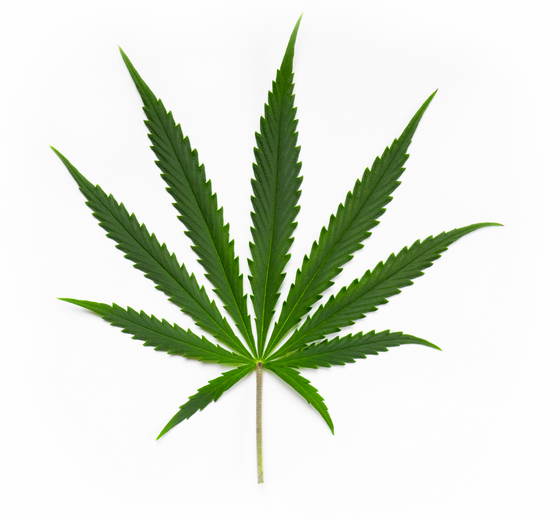 Pot Leaf Image