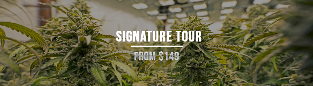 Signature Tour: From $149